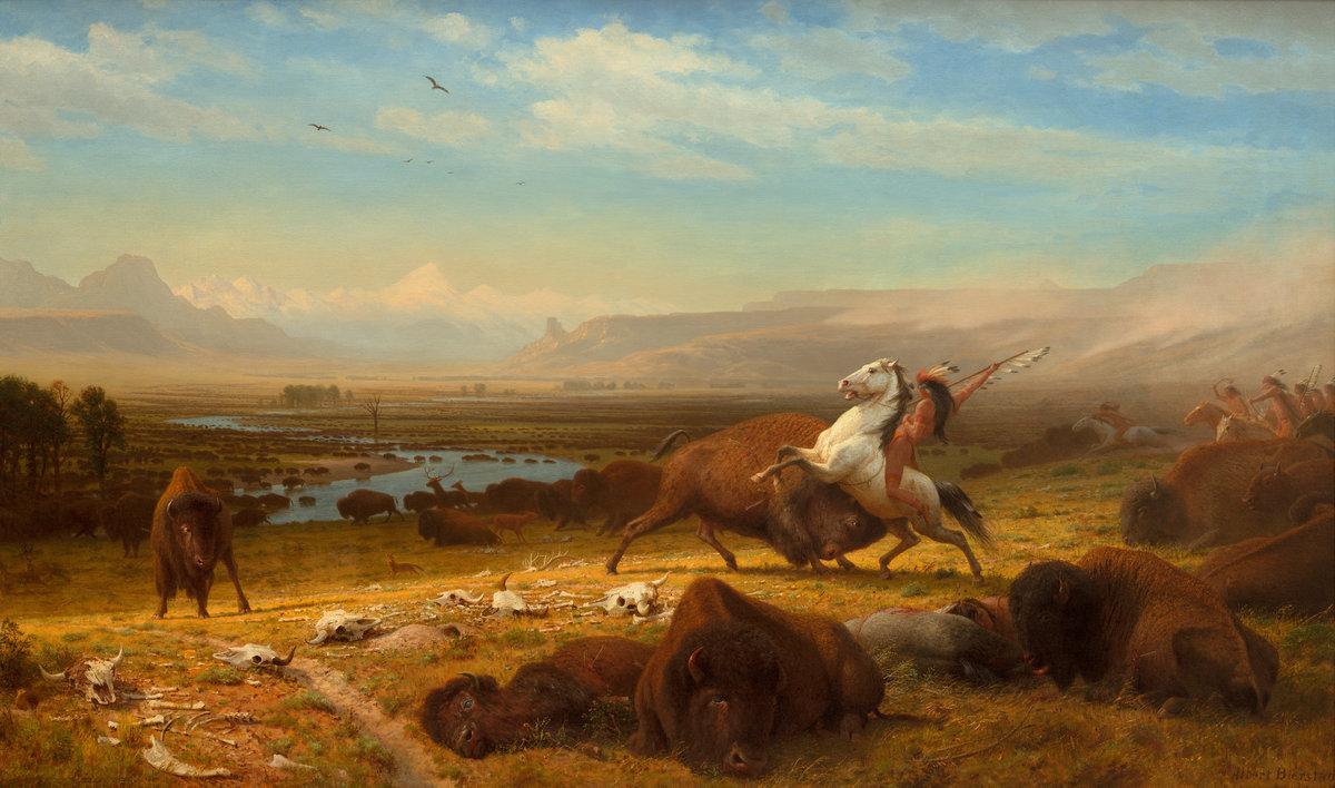The last of the buffalo.jpg