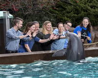 Dolphin Encounter.jpg